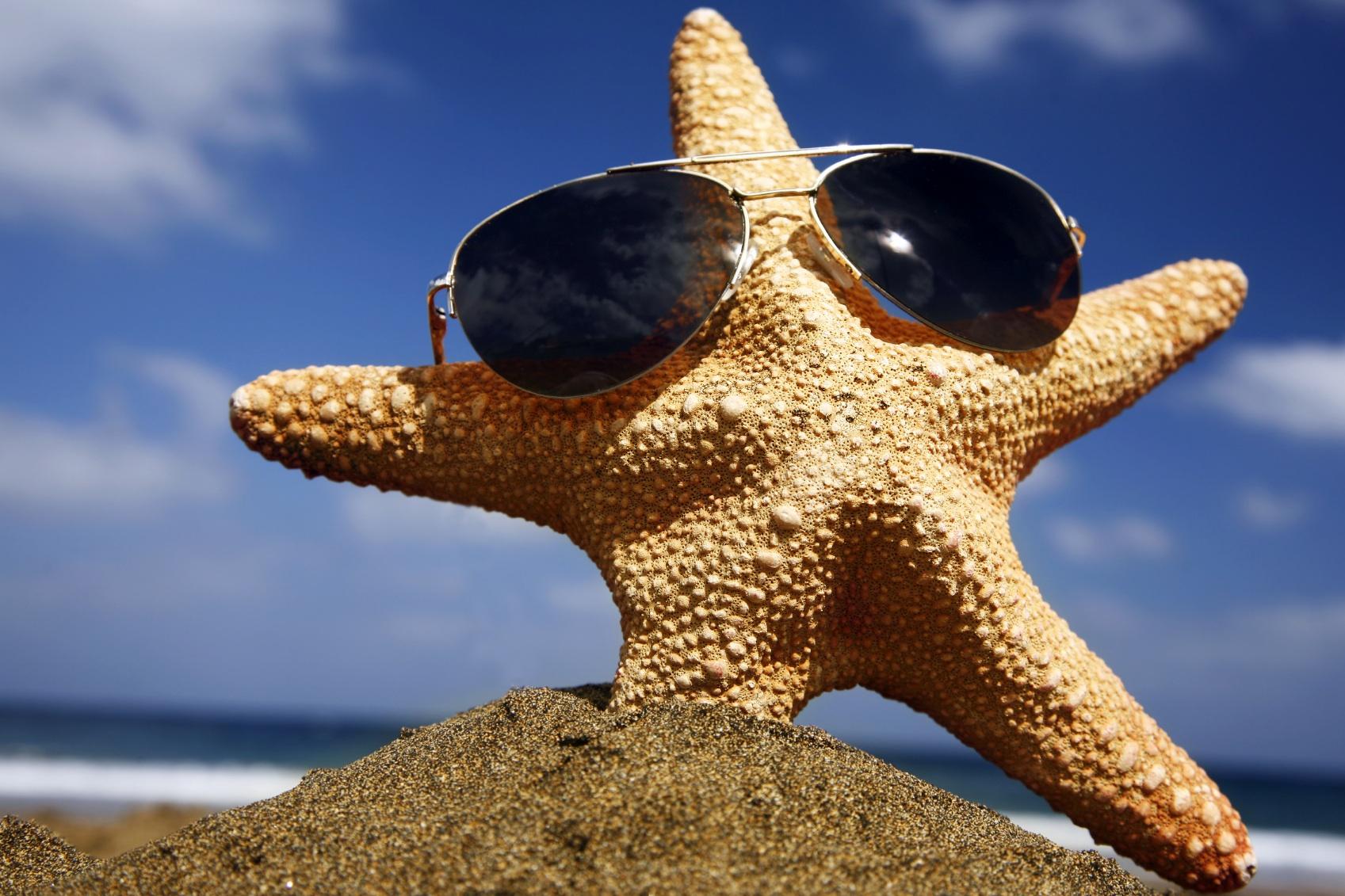 Sea star Animal Review